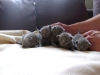 kittens-2